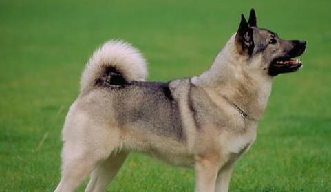 爱犬驯养攻略(2)